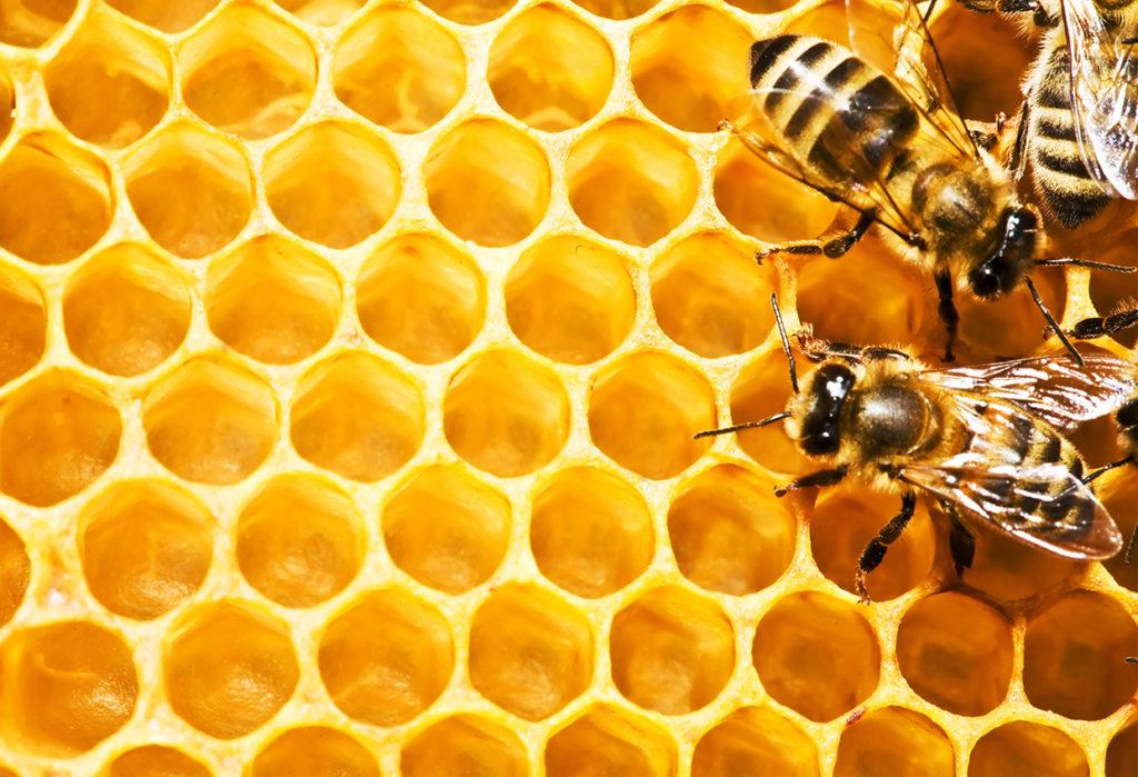 4 beneficios de la cera de abeja para tu piel