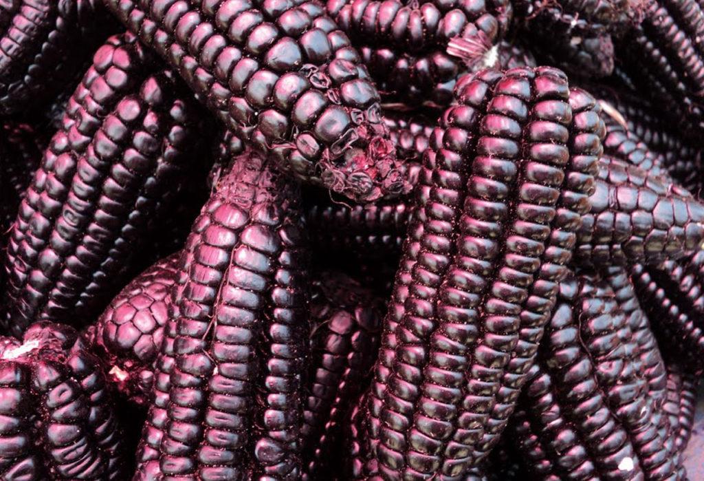 Beneficios del maíz morado