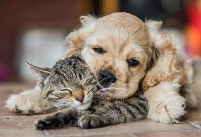 5 Beneficios de tener una mascota en casa
