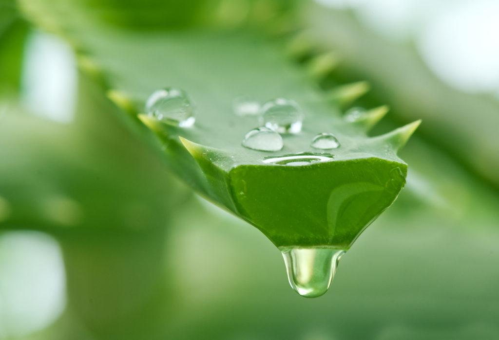 Beneficios de incluir Aloe Vera en tu rutina